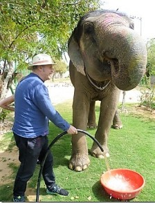 Being this adorable is thirsty work. Michael gives an elephant a drink.