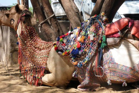 Camel transport. The Thar desert in in this region.