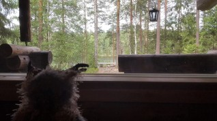 Gazing out of the cottage at Hawkhill Nature, Espoo.