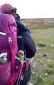 Meeko likes to sit in Jo's rucksack and intimidate passers-by.